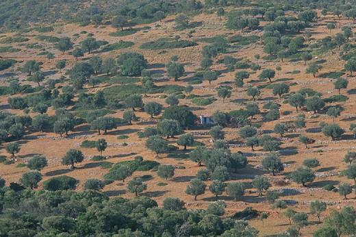 greece, sporades islands, alonissos island, fragoverga : Stock Photo