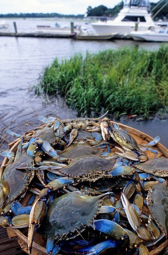 The Crab Shack restaurant at Tybee Island is famous for its seafood platters and its blue crabs. Savannah, Georgia, U.S.A. : Stock Photo