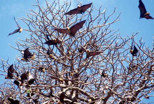 bats : Stock Photo