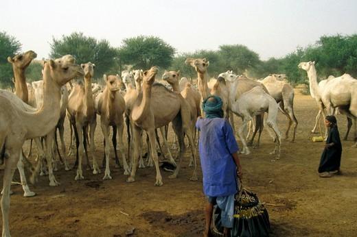 niger, agadez, tuareg land : Stock Photo