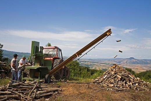 europe, italy, tuscany, castell´azzara, cut of the lumber : Stock Photo