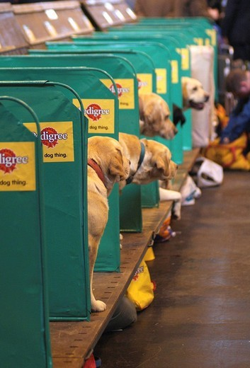 crufts 2007, dog show : Stock Photo