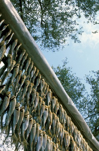 europe, italy, lombardy, brescia province, montisola, iseo lake, agoni fishes : Stock Photo