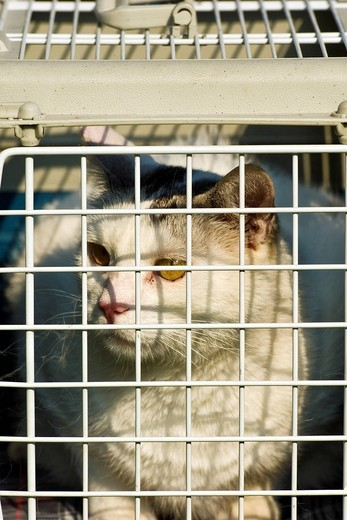 Stock Photo: 3153-825534 Cage for transporting cats. Cage for transporting cats