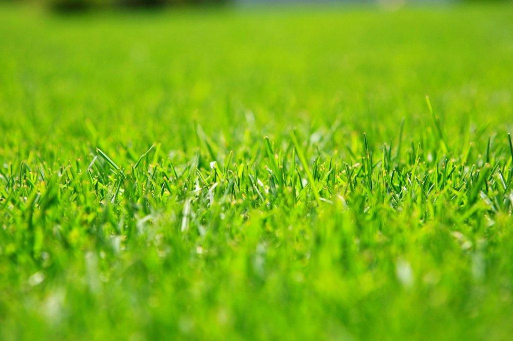 prato. meadow : Stock Photo