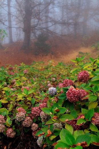 Stock Photo: 3153-837346 riserva naturale speciale del parco burcina felice piacenza, pollone, piemonte, italia. riserva naturale speciale del parco burcina felice piacenza, pollone, piedmont, italy