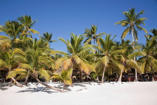 saona, hispaniola, repubblica dominicana, caraibi. saona, hispaniola, dominican republic, caribbean : Stock Photo