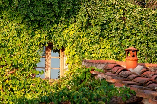 finestra circondata da vite. window surrounded by vines : Stock Photo
