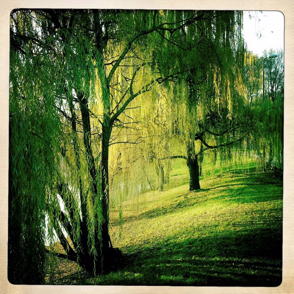 Stock Photo: 3153-841640 parco pubblico, milano, italia. public park, Milan, Italy