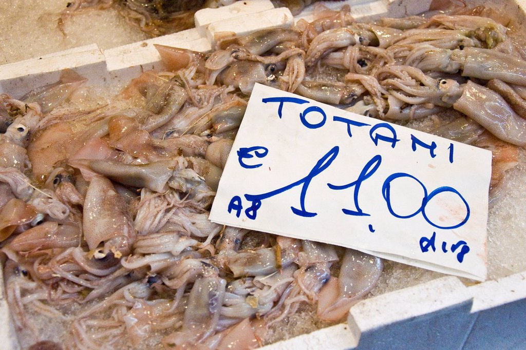 Stock Photo: 3153-841959 Squid, Fish market, Via di PrË, Genoa, Liguria, Italy. Squid, Fish market, Via di PrË, Genoa, Liguria, Italy