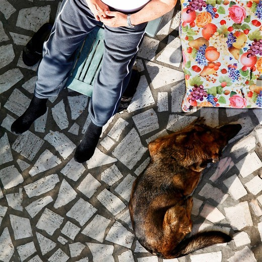 uomo e cane in relax. man and dog in relax : Stock Photo