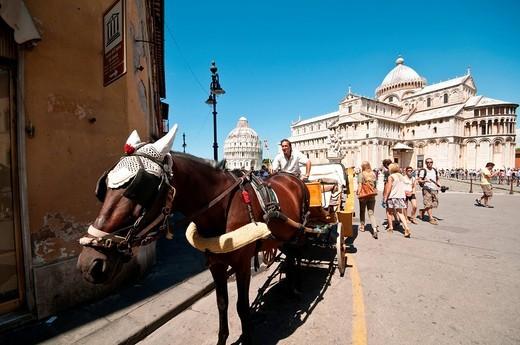 cavallo con carrozza, piazza dei miracoli, pisa, italia. horse carriage in piazza dei miracoli, pisa, tuscany, italy : Stock Photo