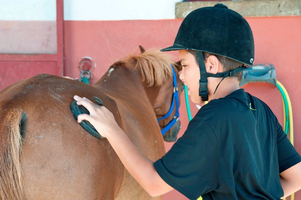 bambino che striglia un cavallo. child who grooms a horse : Stock Photo