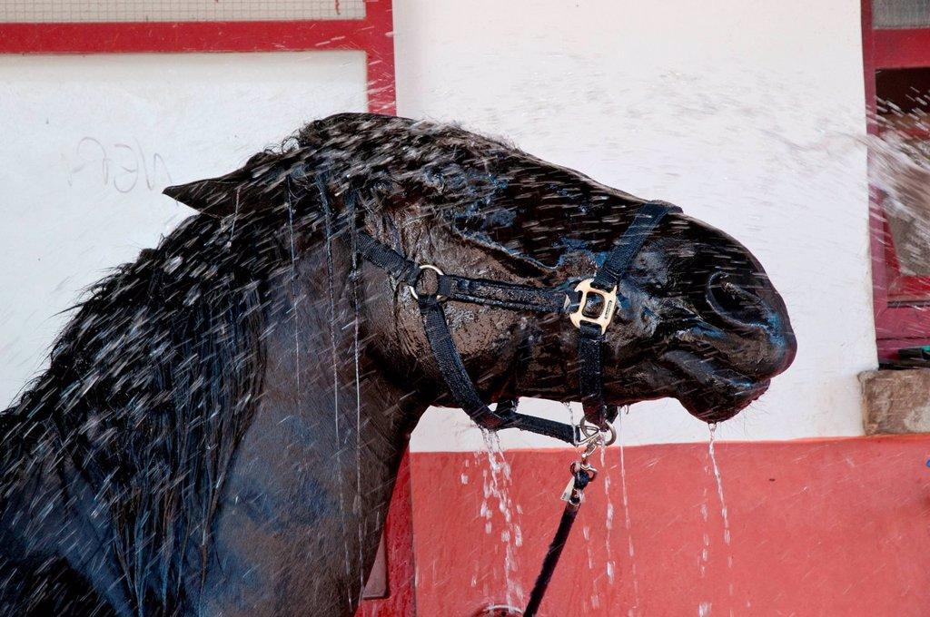 Stock Photo: 3153-854679 cavallo che viene lavato. horse which is washed
