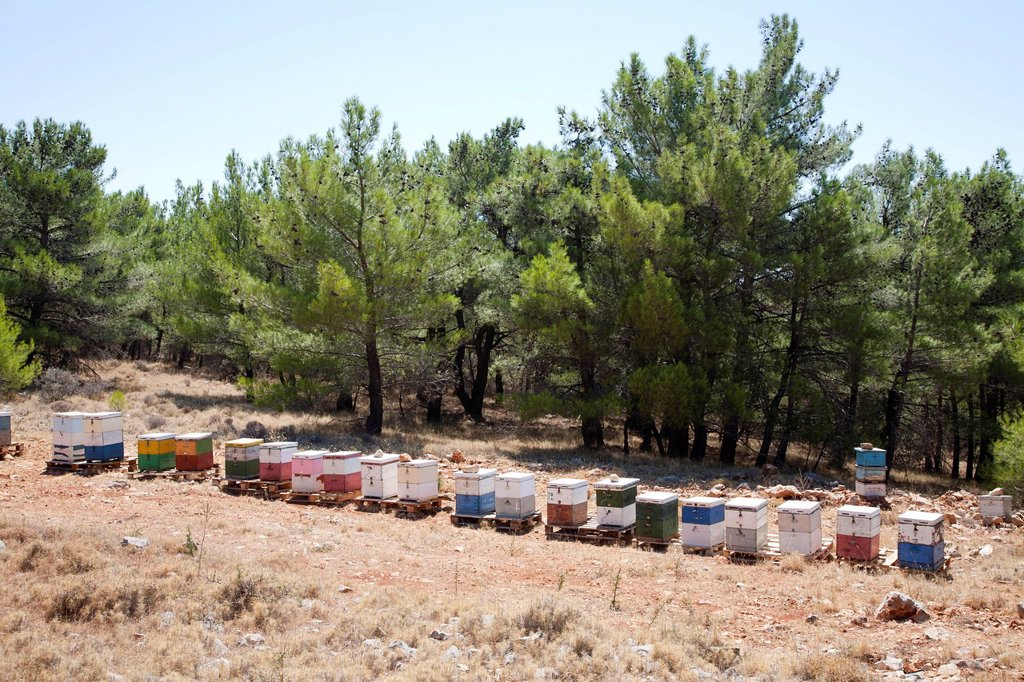 Stock Photo: 3153-862181 arnie, isola di chio, mar egeo nord orientale, grecia, europa. hives, island of chios, north east aegean sea, greece, europe