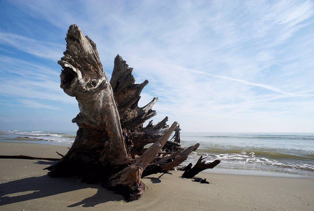 Stock Photo: 3153-862612 tronco d´albero sulla spiaggia di scanno boa, delta del po, veneto, italia. scano boa, polesine, veneto, italy
