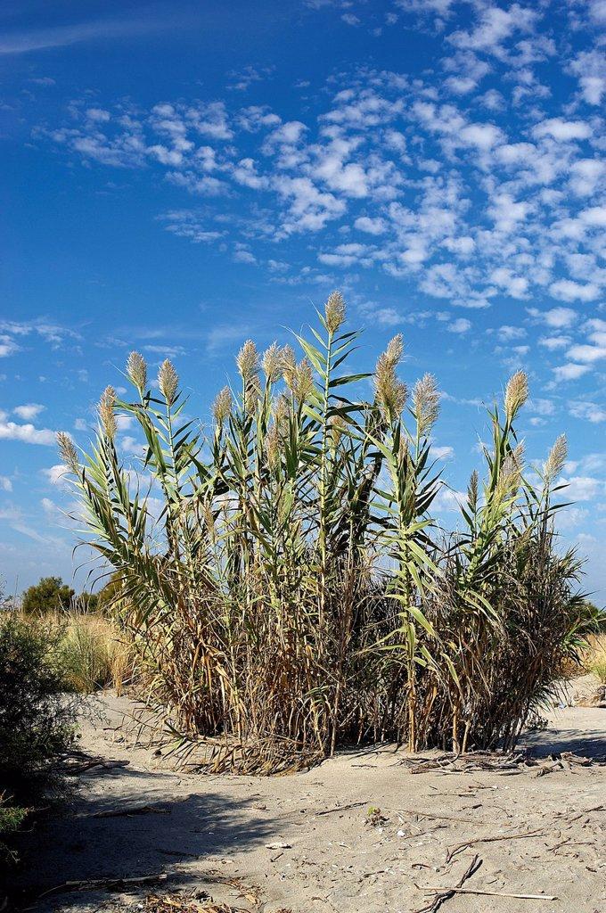 spiaggia di scanno boa, delta del po, veneto, italia. scano boa, polesine, veneto, italy : Stock Photo