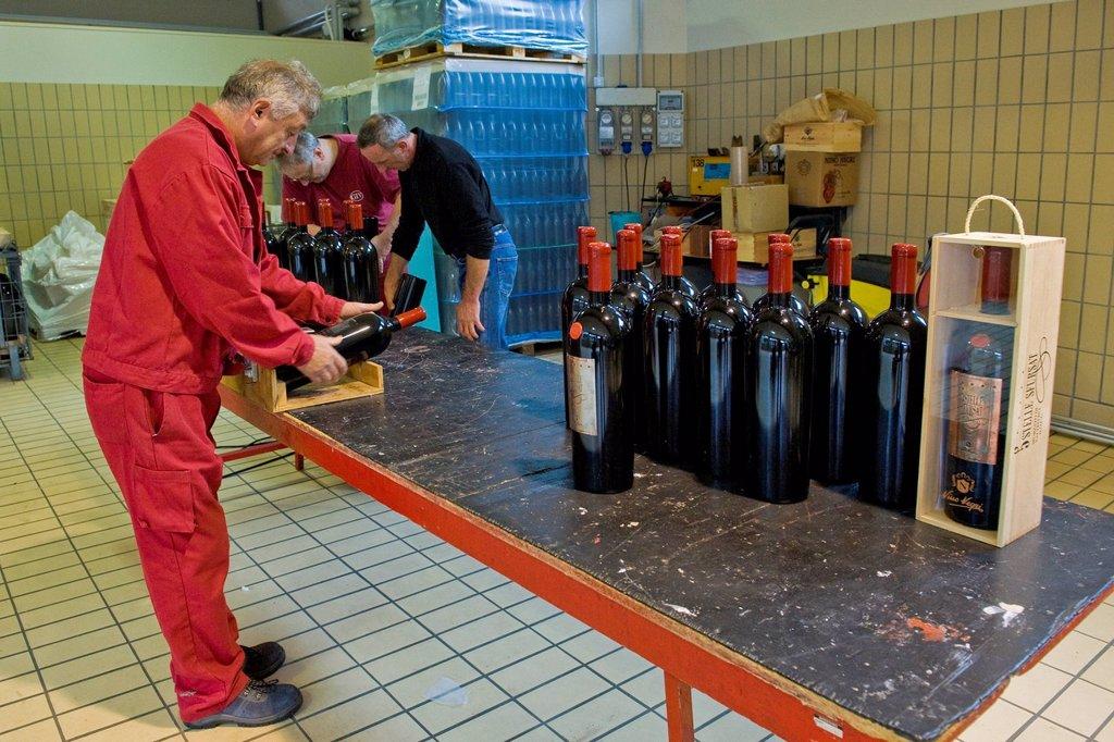 Stock Photo: 3153-869245 casa vinicola nino negri, chiuro, valtellina, lombardia, italia. Italy, Lombardy, Valtellina, Chiuro, Casa vinicola Nino Negri, Nino Negri vinery