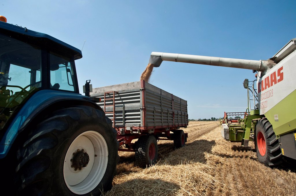 Stock Photo: 3153-870989 trebbiatura del grano nei pressi di castelnuovo scrivia, piemonte, italia. wheat threshing near Castelnuovo Scrivia, Piedmont, Italy