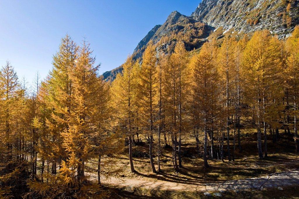 Stock Photo: 3153-871527 alpe devero, piemonte, italia. Italy, Piedmont, Devero alp, Alpe Devero