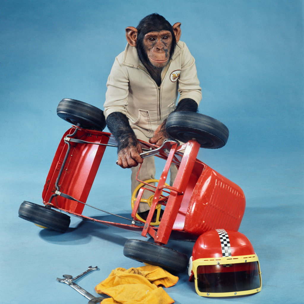Stock Photo: 3159-514238B Studio shot of chimp repairing go-cart