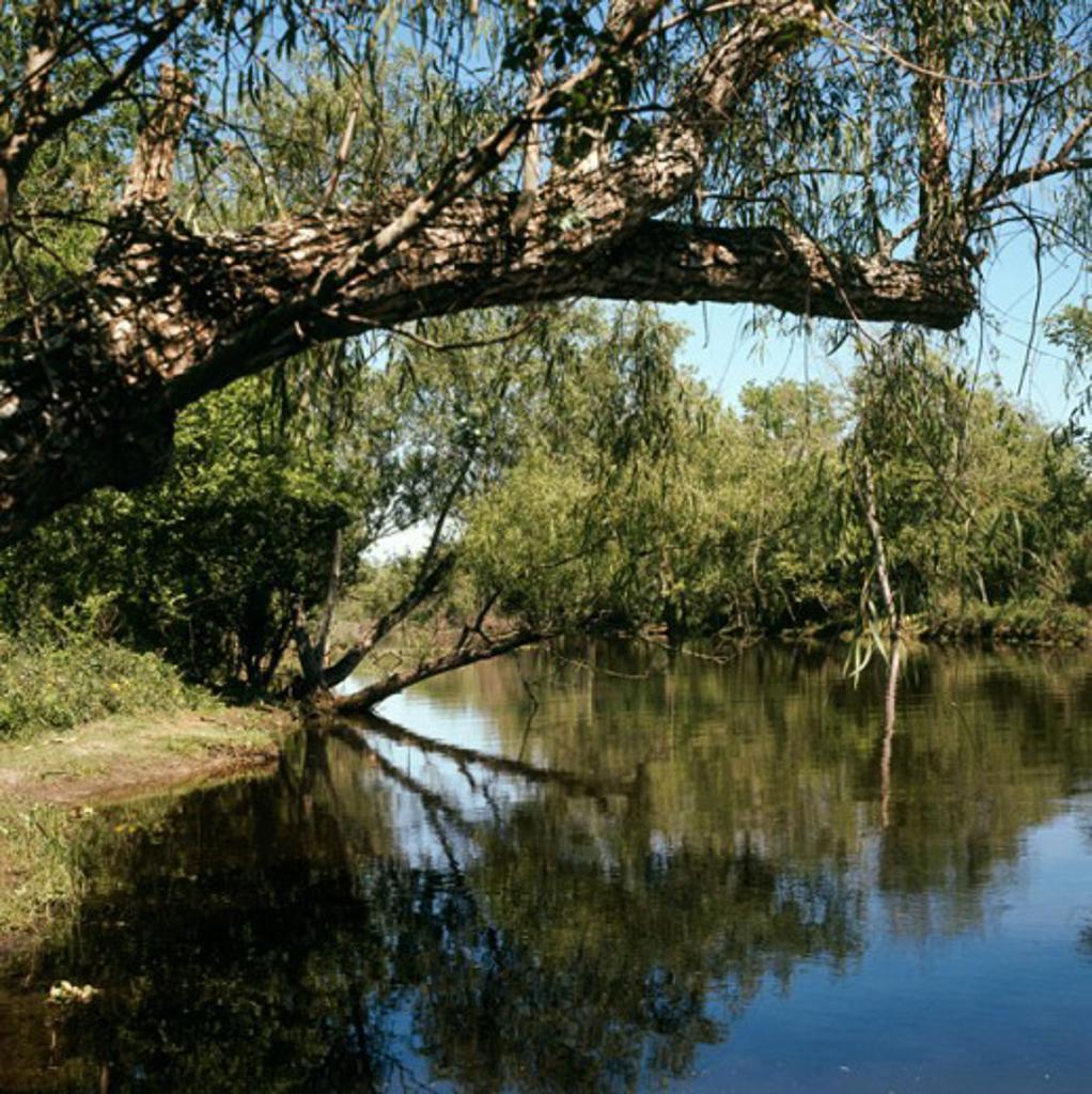 Stock Photo: 3800-487649 Louisiana USA