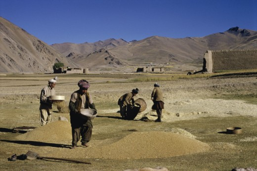 Stock Photo: 3803-467860 Threshing Wheat
