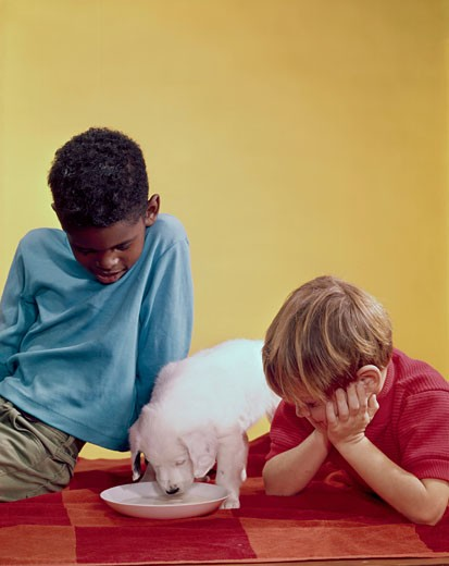 Close-up of two boys looking at a puppy drinking milk from a saucer : Stock Photo