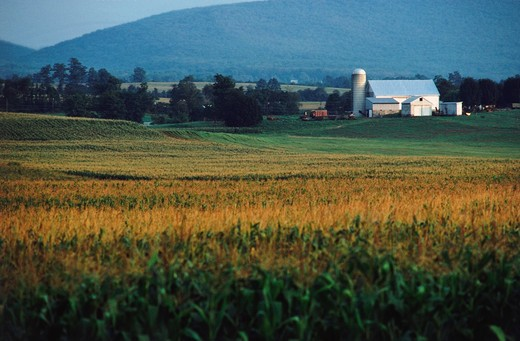 Stock Photo: 4009-705 Farmhouse and silo in a field, Lancaster, Lancaster County, Pennsylvania, USA