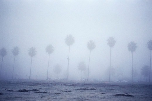 Stock Photo: 4009-965 Row of palm trees along a foggy beach, Florida, USA