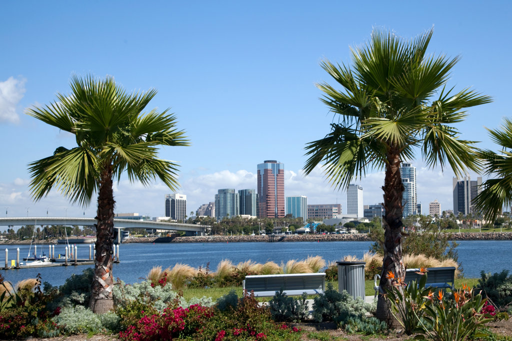Stock Photo: 4017-2675 Palm trees with skyscrapers in the background, Long Beach, Los Angeles River, Los Angeles County, California, USA