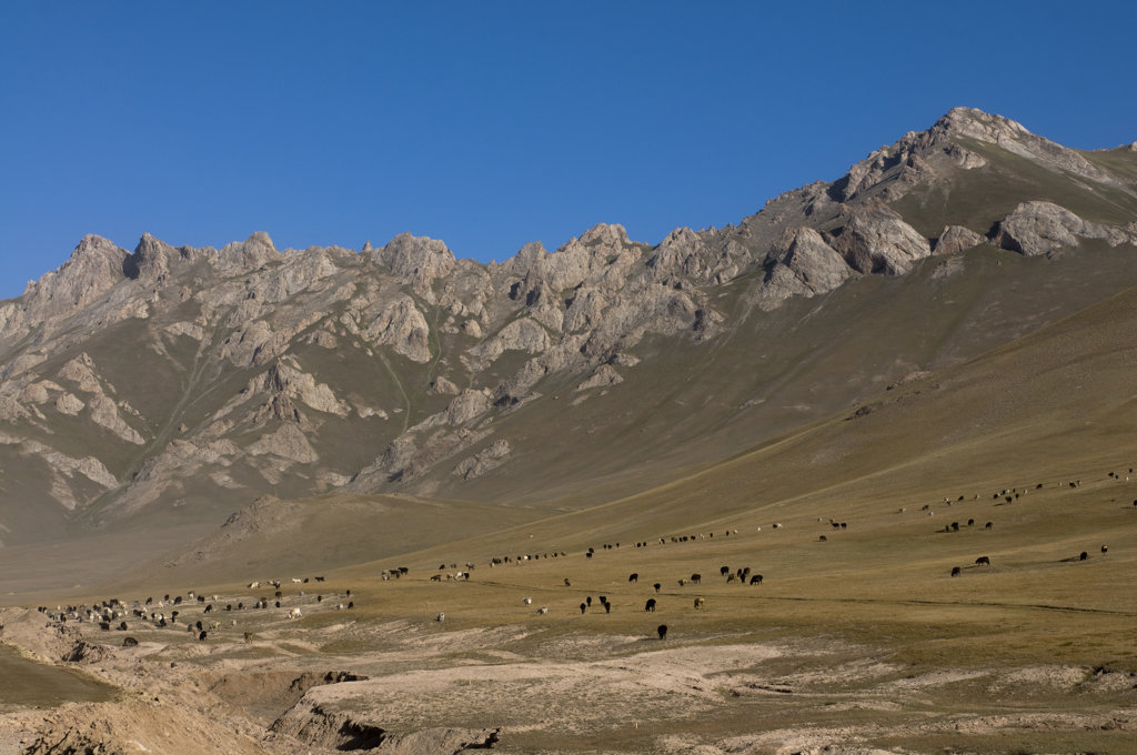 Kyrgyzstan, Osh Province, Wild horses and mountains of Sary Tash : Stock Photo