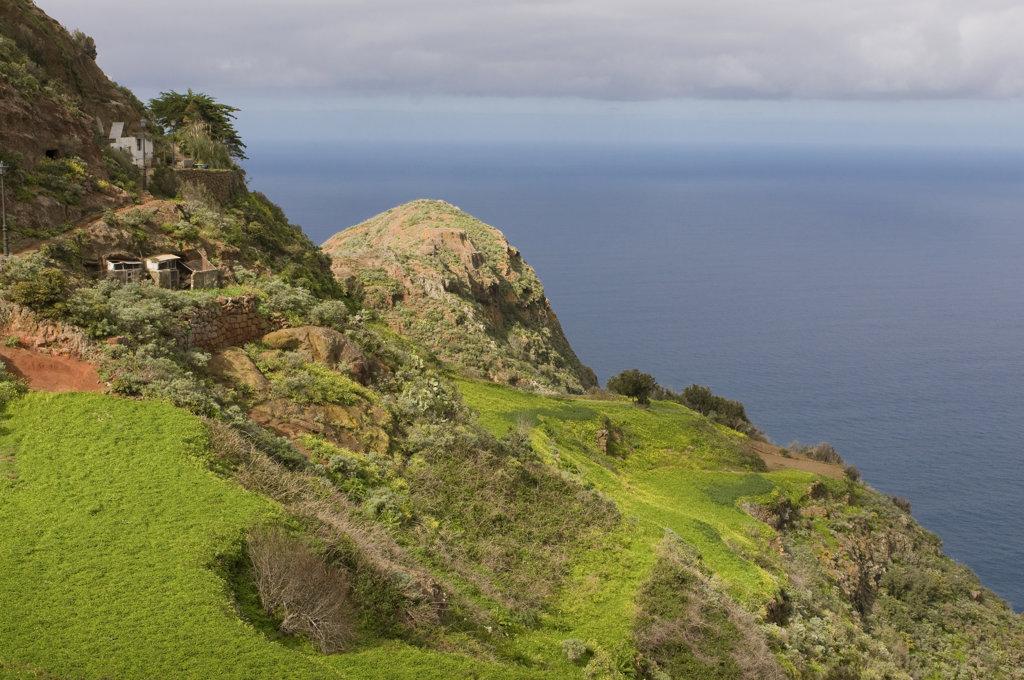 Stock Photo: 4021-587 Moss on rocks, Taganana, Tenerife, Canary islands, Spain