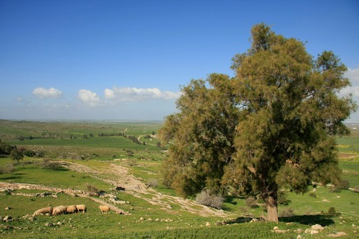 Stock Photo: 4023-197 Tree at an archaeological site, Gath, Shephelah, Israel