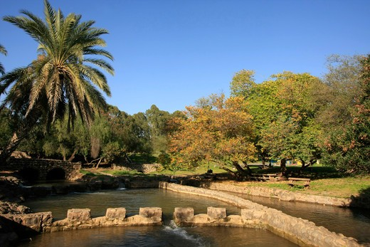 Stock Photo: 4023-236 Trees in a park, Jordan River Park, Israel