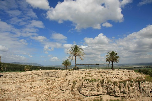 Palm trees at archaeological site, Tel Megiddo, Jezreel Valley, Lower Galilee, Israel : Stock Photo