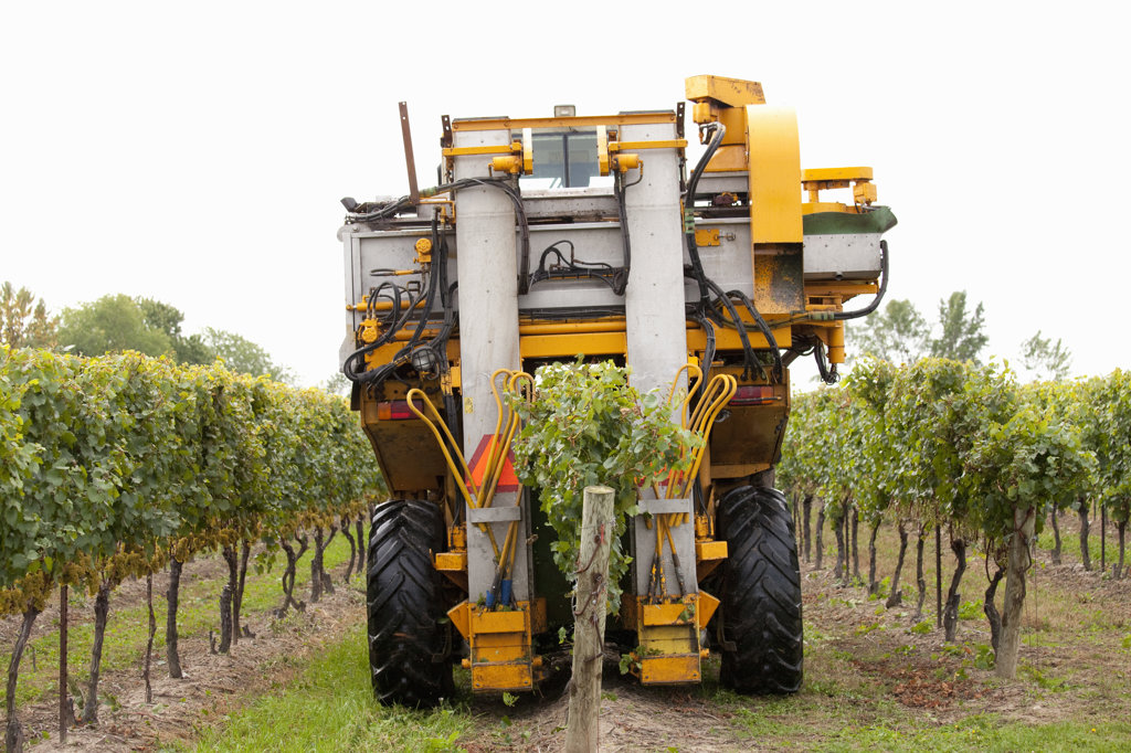 Harvester in a vineyards, Ontario, Canada : Stock Photo