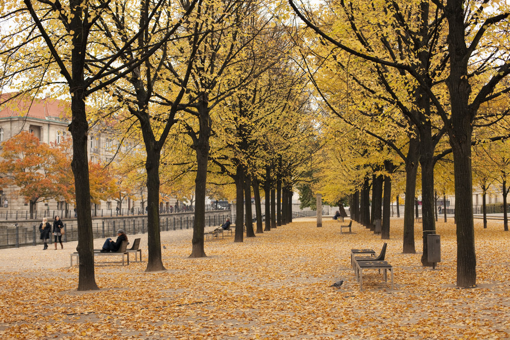 Stock Photo: 4025-195 Trees in a park, Lustgarten, Museum Island, Berlin, Germany