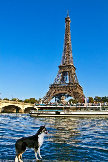 Paris, ile-de-France, France, a tourist sight seeing boat passes underneath the Pont D'Lena bridge on the Seine River by a dog and the Eiffel Tower (Tour Eiffel) : Stock Photo