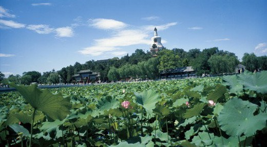 Stock Photo: 4029R-100080 Water lilies and blue sky, Beihai Park, Beijing