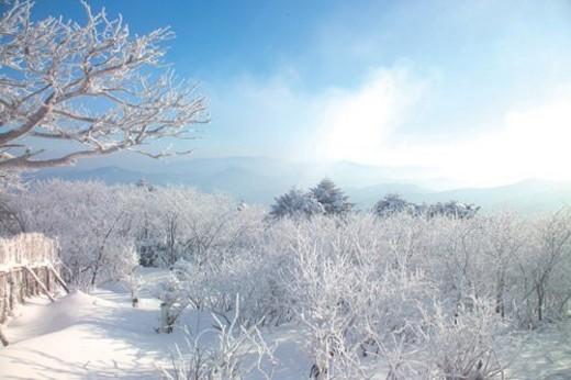 scene, snow, sky, winter, mountain, view, tree : Stock Photo