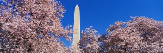 Stock Photo: 4029R-105996 Washington Monument