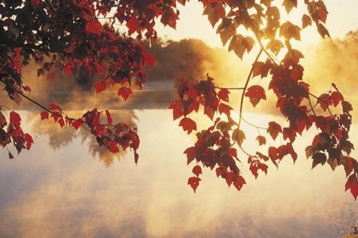 Stock Photo: 4029R-109230 Sunrise Through Autumn Leaves, New England