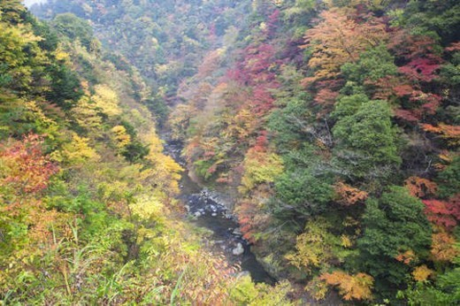 Stock Photo: 4029R-111968 River through a forest in Autumn