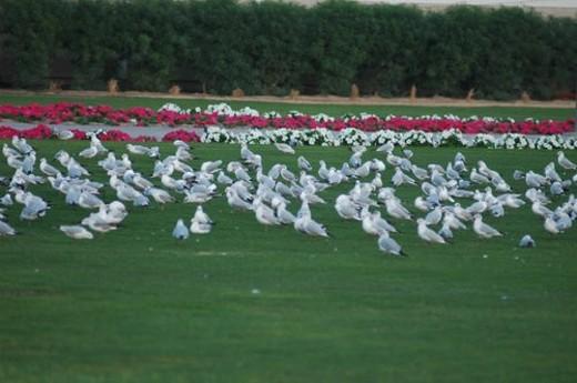 birds, flying, park : Stock Photo