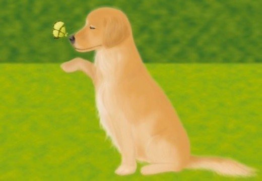 Stock Photo: 4029R-11692 Butterfly perching on nose of Golden Retriever, side view, differential focus