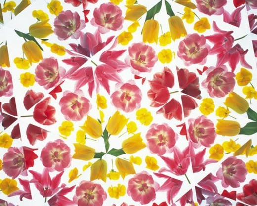 Kaleidoscope, Flower, Close Up : Stock Photo