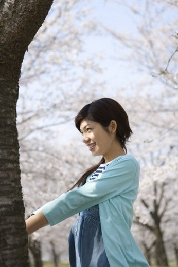 Woman standing under the cherry tree, side view, Japan : Stock Photo