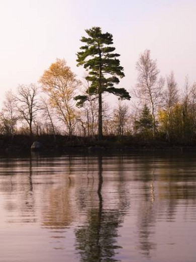 Trees reflected in a lake : Stock Photo