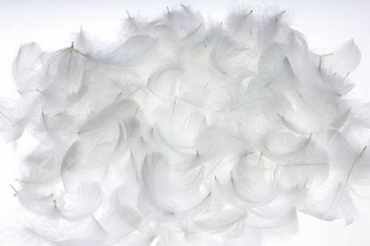 White feathers, white background : Stock Photo